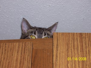 Kitty on the cupboards
