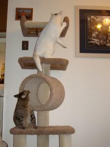 New Cat Tree